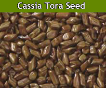 Cassia Tora Seed Suppliers in India