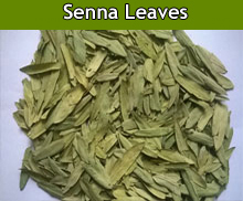 Senna Leaves Suppliers in India